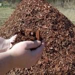 2012-03-14_14-05-17_174-mulch