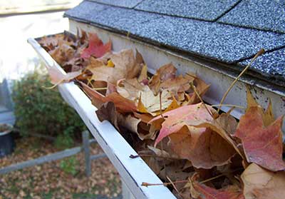 When neglected or forgotten, gutters make ideal conditions for mosquitos to multiply, red back spiders to breed, cockroaches to infest and other insects and animals to live.
